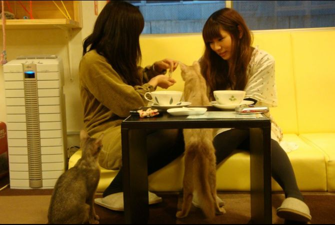 Cat Cafés